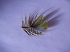 green hat  feather 002