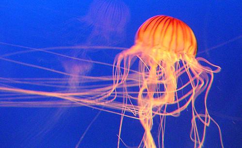 Japanese Aquarium, Ocean World