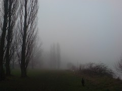 nebel am main