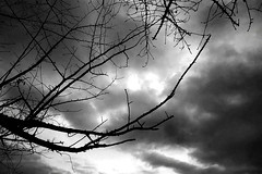 Beau ciel, vrai ciel | Paul Valry ( enzinho) Tags: test rome iso200 frenchpoetry 20mm eur inverno gennaio laghetto enzinho allrightsreserved fotopoesia paulvalry bnesperimenti bwdesaturation enzinho62