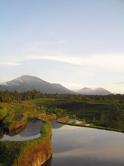 other side view (januartha) Tags: sunrise farm farmer sawah petani paktani terasering paternt