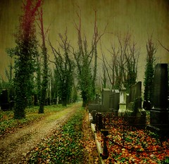 The old jewish cemetery - by Mabar