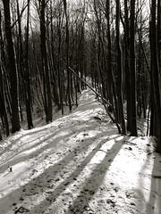 (Sameli) Tags: trees winter light shadow bw white snow black tree nature forest germany landscape lights thringen blackwhite shadows path thuringia paths eisenach