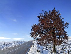 Road and Tree (for curious spider) (andrewlee1967) Tags: road uk winter england sky snow tree landscape yorkshire helluva andrewlee instantfave andrewlee1967 impressedbeauty ultimateshot andylee1967 focusman5