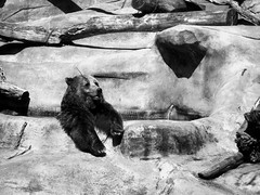 bear at zoo (BookMama) Tags: stock best wordless