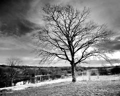 Tree of Life (Sean Bolton (no longer active)) Tags: bw tree monochrome wales mono carmarthenshire cymru wfc nationalbotanicgardens seanbolton welshflickrcymru ffotocymrucouk ffotocymru