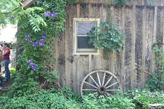 Shed with flowers and wagon wheels, Brown County, IN (gnuru) Tags: wood window wheel barn rural shed vine weathered wagonwheel