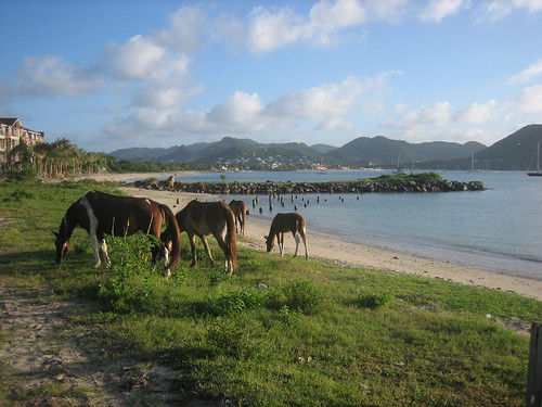Horses on the beach - Gros Islet, St. Lucia por sidebetsteve.