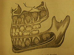 Review: Observations on ... the Teeth, by Harvey and John Burdell. - by rosefirerising