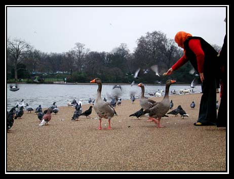 Feeding the Ducks