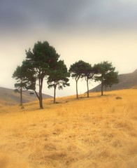 Hill (andrewlee1967) Tags: uk trees england landscape hill greenfield saddleworth andrewlee andrewlee1967 focusman5