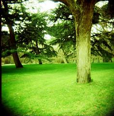 Muy verde... (DavidGorgojo) Tags: madrid tree verde green grass arbol xpro procesocruzado crossprocessing holga120 120mm hierba fujivelvia c41 parquedelcapricho