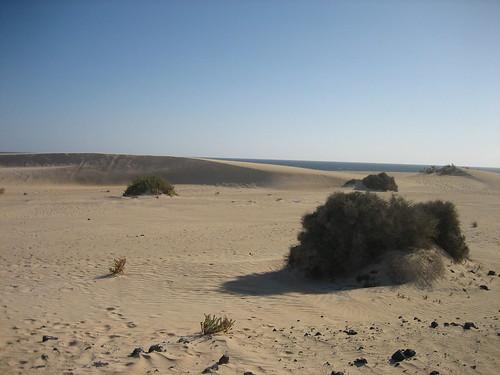 dunas de Corralejo -1