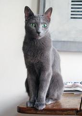Elvis - a very elegant cat