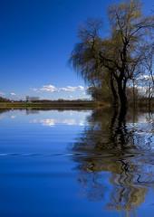 distance (myfear) Tags: blue sky reflection tree topf25 water topv111 clouds photoshop topf50 topv555 topv333 bravo flood quality drop topv777 magicdonkey abigfave anawesomeshot colorphotoaward superaplus superbmasterpiece