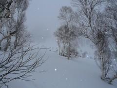 P1010075.JPG (blakewhitman) Tags: india snow skiing christian jonny kashmir nash blake himalayas lora crista gulmarg