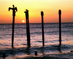 Pelican Sunset (Musical Mint) Tags: travel sunset summer vacation sun holiday beach pelicans birds island paradise view dusk carribean pelican aruba posts helluva musicalmint