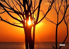 Artistic Sunset (*Saariy*) Tags: trees sunset sea sky sun nature beautiful canon turkey relax ilovenature boat seaside scenery view trkiye scene istanbul turquie shore turquia turchia turkei naturesfinest blueribbonwinner supershot instantfave flickrsbest canonpowershota700 mywinner flickrgold anawesomeshot colorphotoaward impressedbeauty holidaysvacanzeurlaub blueribbonphotography superbmasterpiece treesubject wowiekazowie flickrdiamond excellentphotographeraward saariysqualitypictures