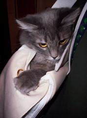 cat bag dayton