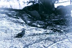 A Birdie! (Jori Samonen) Tags: animal bird stick tree viikki helsinki finland nikon d3200 1050 mm f28