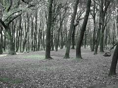 Acqua Frida Green (Stranju) Tags: sardegna verde foglie canon italia sardinia ombra luce rami bosco foresta elfi marmilla sottobosco canonpowershots3is canonpowershots3 stranju acquafrida morgongiori montearci withcanonican whitcanonican