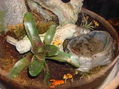 Poison Frogs    (dandy) Tags: fish beach aquarium long pacific    frog