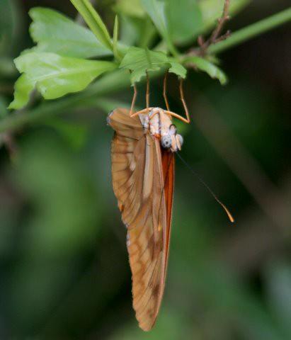 Butterfly, IMG_0867.JPG