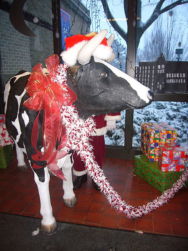 December: Cornellia