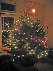 Warren the tree