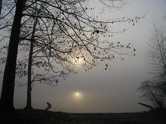 two suns 2 (Balalalu) Tags: usa nature fog sunrise reflections connecticut ysplix