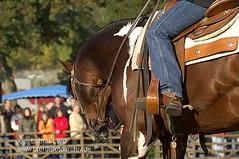 _LE57295 (Lothar Lenz) Tags: horse caballo cheval cavalo pferd hest equus paard sporen painthorse hst hestur konj hobu zirgs westernreiten lotharlenz lukasmarktmayen matthiasfrisch passionateandy