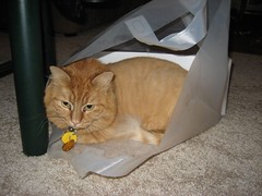 Drooly in a bag