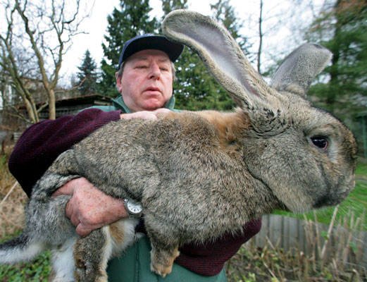 You Re An Ass Look At This Monster Bunny Rabbit