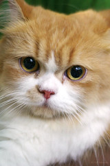 Cute Kitten IMG_5757.jpg (^hSirius) Tags: portrait favorite pet cats pets cute animal animals cat fur nose interestingness eyes furry kitten feline canon20d tabby adorable favorites kitty kittens whiskers explore views kitties meow breed cutest cutecat cutecats catshow cutekitten cutekittens catportrait beautifulcat beautifulcats cc100 kittysuperstar kissablekat impressedbeauty kittyschoice superbmasterpiece beyondexcellence flickrdiamond