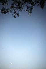 1 Tree above, moon below