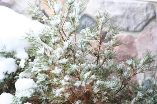 winter 006
