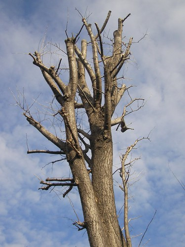 春の兆しがないような木もあるけど…