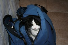 Palomita In My Backpack (2)