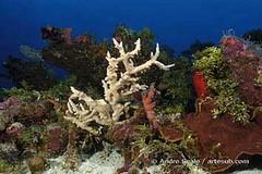 Rongelap - corais
