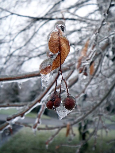 07-January-IceStorm
