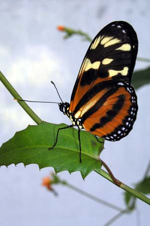 360127905 af131f52a5 - Lovely Butterfly Photos