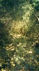 Maquis du ruisseau de Campi Solcu