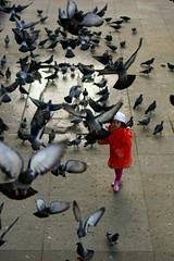 Pigeons Carnival - by Pensiero