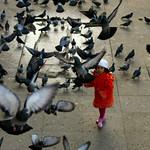 Pigeons Carnival