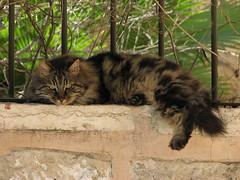 Scowling Cat