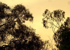 Ghastly sky