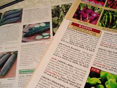DSC00853.JPG (David Blaine) Tags: garden seeds radish