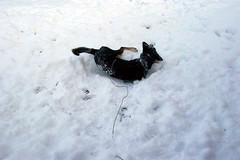 sally silly snow 3