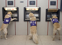Dogs Using ATMs