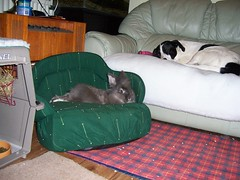 Blue and Jody relaxing